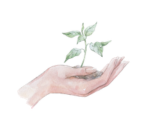 planta mano